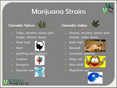 Strain Information