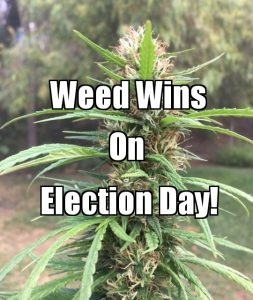 Weed Wins on Election Day. So What Comes Next?