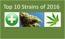 Top 10 Strains of 2016